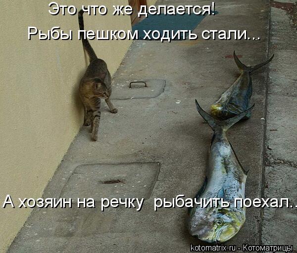 Котоматрица: Это что же делается!  А хозяин на речку  рыбачить поехал... Рыбы пешком ходить стали...