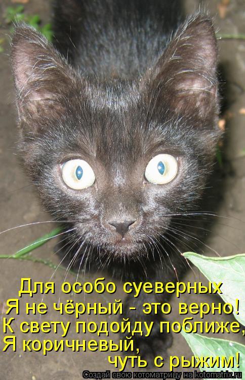 Котоматрица: Для особо суеверных Я не чёрный - это верно! К свету подойду поближе, чуть с рыжим! Я коричневый,
