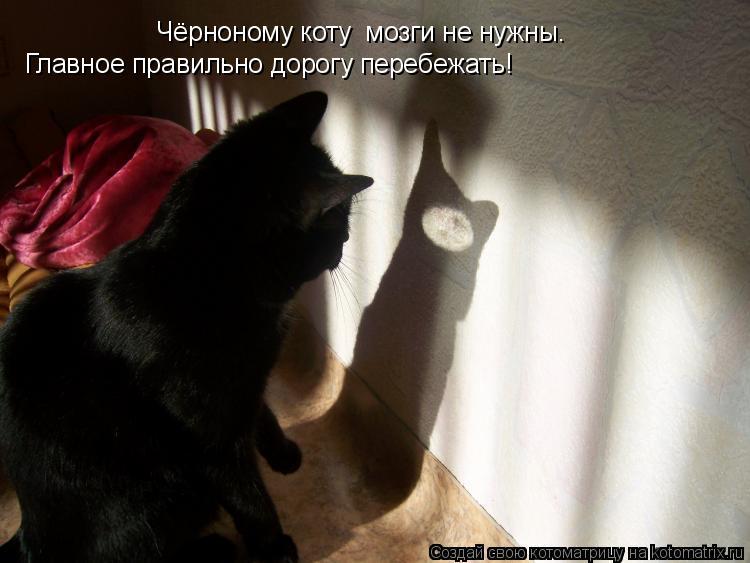Котоматрица: Чёрноному коту  мозги не нужны. Чёрноному коту  мозги не нужны. Главное правильно дорогу перебежать!