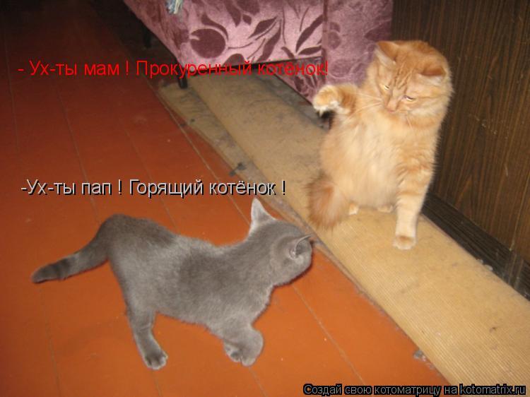 Котоматрица: - Ух-ты мам ! Прокуренный котёнок! -Ух-ты пап ! Горящий котёнок !