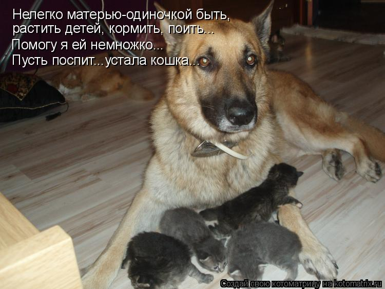 Нелегко матерью-одиночкой быть, растить детей, кормить, поить... <br />Помог