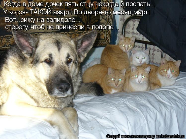 Котоматрица: Вот...сижу на валидоле... стерегу, чтоб не принесли в подоле... Когда в доме дочек пять,отцу некогда й поспать... У котов- ТАКОЙ азарт! Во дворе-то