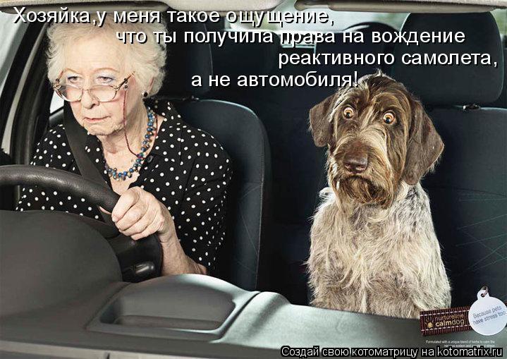 Котоматрица: Хозяйка,у меня такое ощущение, что ты получила права на вождение реактивного самолета, а не автомобиля!