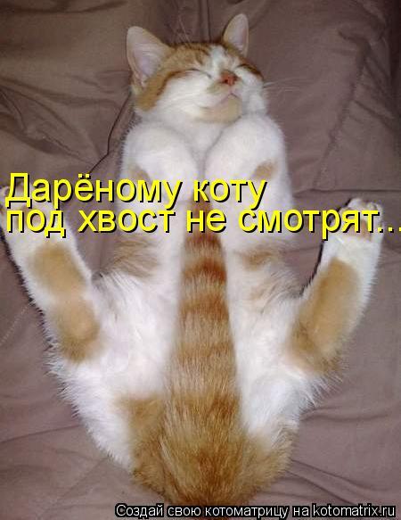 Дарёному коту под хвост не смотрят...