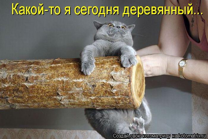 Котоматрица: Какой-то я сегодня деревянный...