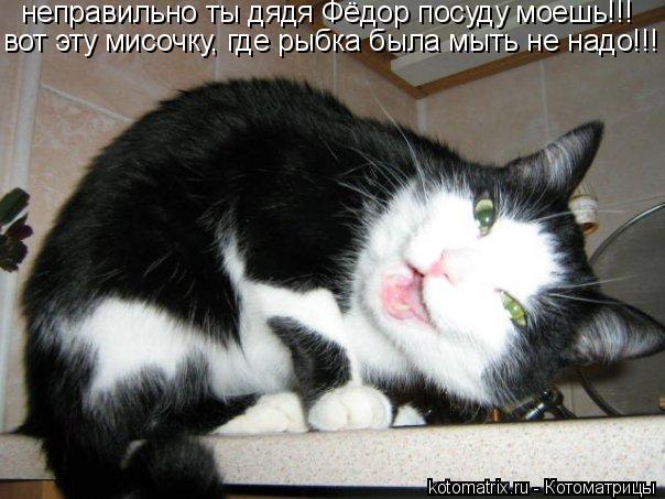 Котоматрица: неправильно ты дядя Фёдор посуду моешь!!! вот эту мисочку, где рыбка была мыть не надо!!!