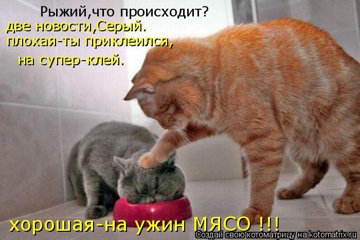 Котоматрица: Рыжий,что происходит? плохая-ты приклеился, на супер-клей. хорошая-на ужин МЯСО !!! две новости,Серый.