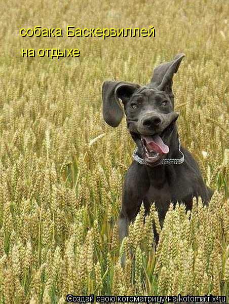 Котоматрица: на отдыхе собака Баскервиллей