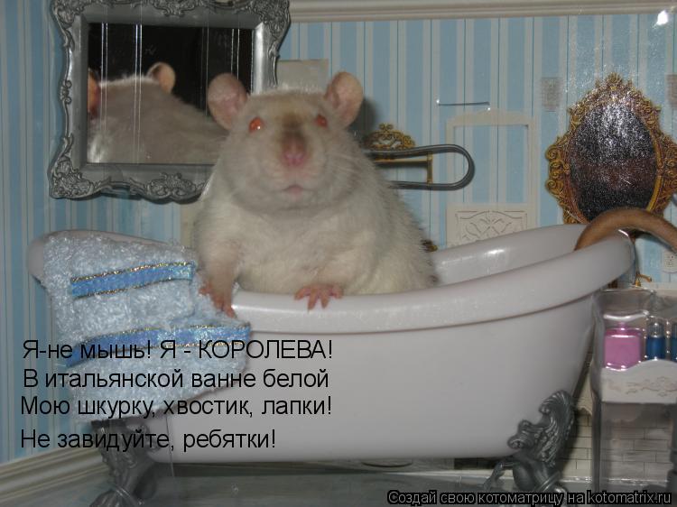 Котоматрица: Я-не мышь! Я - КОРОЛЕВА! В итальянской ванне белой Мою шкурку, хвостик, лапки! Не завидуйте, ребятки!