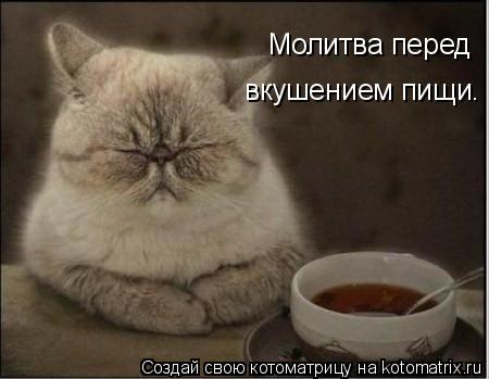 Котоматрица: Молитва перед вкушением пищи.