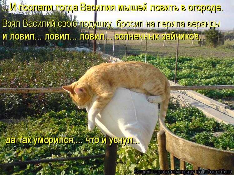 Котоматрица: ...И послали тогда Василия мышей ловить в огороде.  Взял Василий свою подушку, бросил на перила веранды  и ловил... ловил... ловил... солнечных за