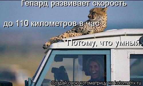 Гепард развивает скорость до 110 километров в час Потому, что умн