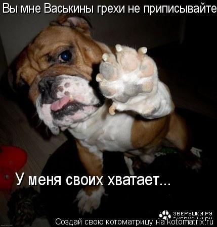 Котоматрица: Вы мне Васькины грехи не приписывайте. У меня своих хватает...