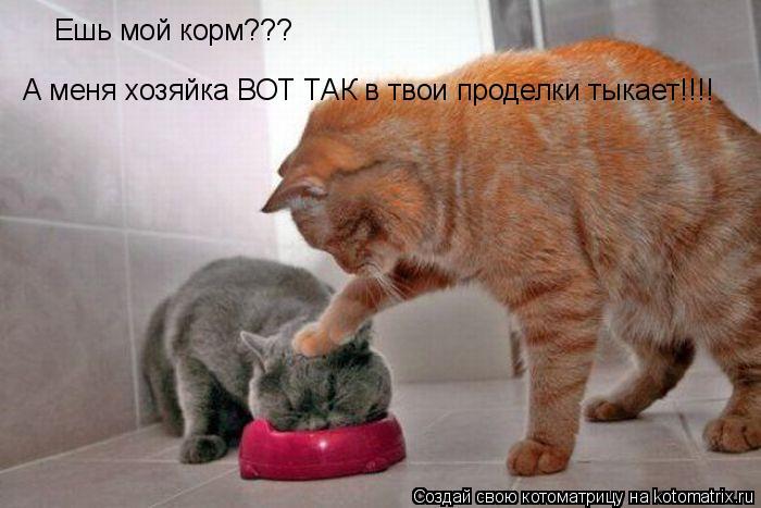 Котоматрица: Ешь мой корм??? А меня хозяйка ВОТ ТАК в твои проделки тыкает!!!!