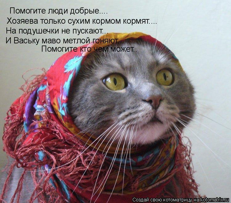 Котоматрица: Помогите люди добрые.... Хозяева только сухим кормом кормят.... На подушечки не пускают... И Ваську маво метлой гоняют... Помогите кто чем может.