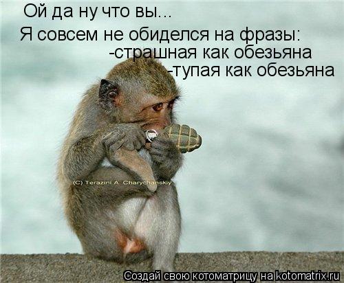 Котоматрица: Ой да ну что вы... Я совсем не обиделся на фразы: -страшная как обезьяна -тупая как обезьяна