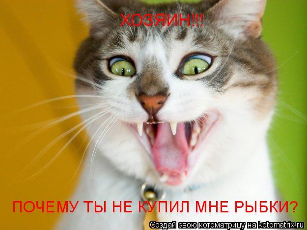Котоматрица: ХОЗЯИН!!! ПОЧЕМУ ТЫ НЕ КУПИЛ МНЕ РЫБКИ?