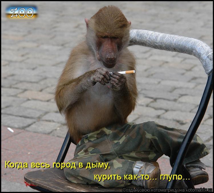 Котоматрица: Когда весь город в дыму, курить как-то... глупо...