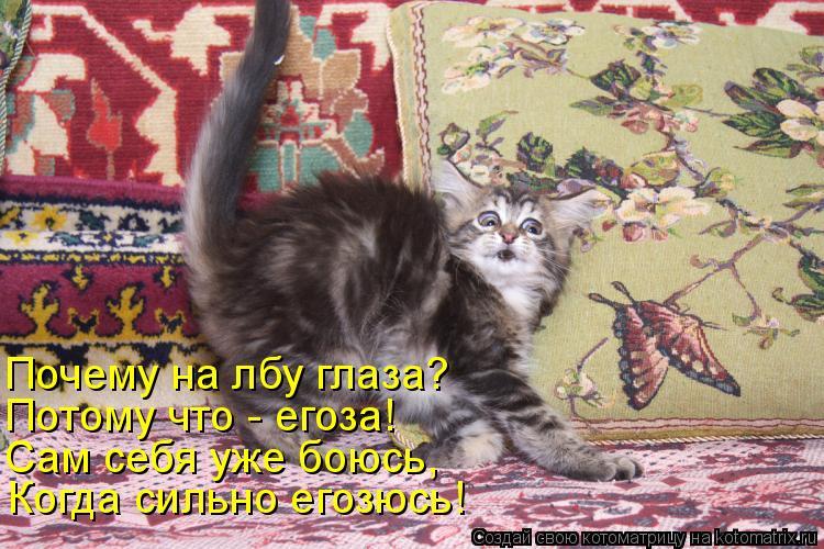 Котоматрица: Почему на лбу глаза? Потому что - егоза! Сам себя уже боюсь, Когда сильно егозюсь!