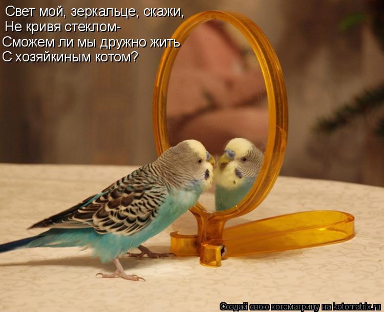 Котоматрица: Свет мой, зеркальце, скажи, Не кривя стеклом- Сможем ли мы дружно жить С хозяйкиным котом?