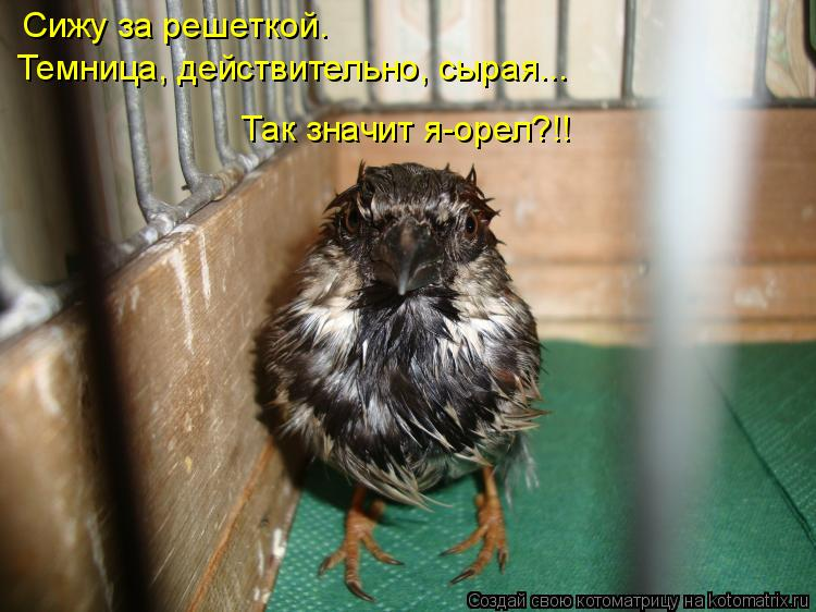 Котоматрица: Сижу за решеткой. Темница, действительно, сырая... Так значит я-орел?!!