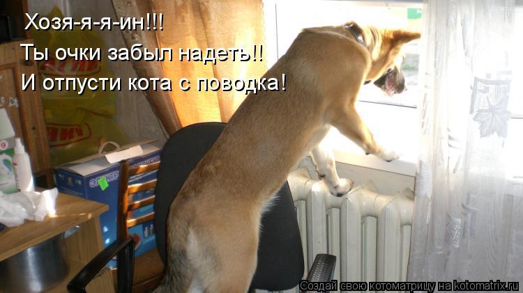Котоматрица: Хозя-я-я-ин!!! И отпусти кота с поводка! Ты очки забыл надеть!!
