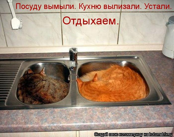 Котоматрица: Посуду вымыли. Кухню вылизали. Устали.  Отдыхаем.