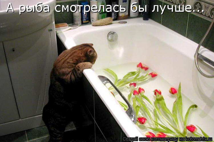 Котоматрица: А рыба смотрелась бы лучше...