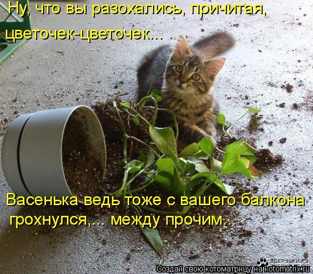 Котоматрица: Ну, что вы разохались, причитая,    цветочек-цветочек…..  грохнулся,... между прочим...   Васенька ведь тоже с вашего балкона