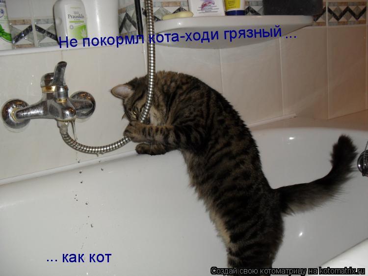 Котоматрица: Не покормл кота-ходи грязный ... ... как кот