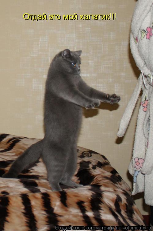 Котоматрица: Отдай,это мой халатик!!!