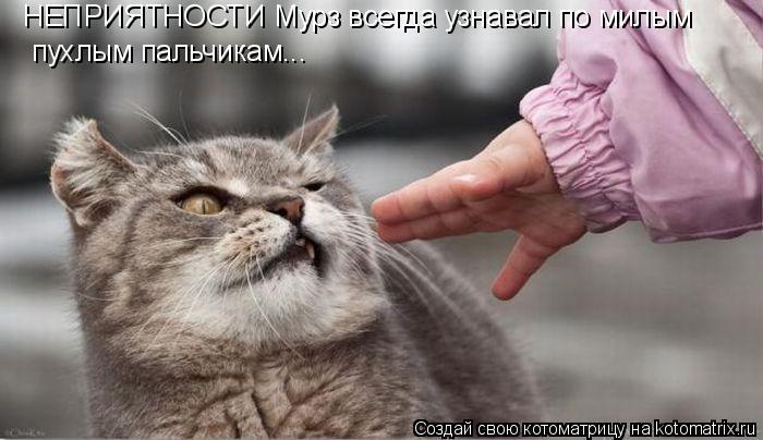 Котоматрица: НЕПРИЯТНОСТИ Мурз всегда узнавал по милым пухлым пальчикам...