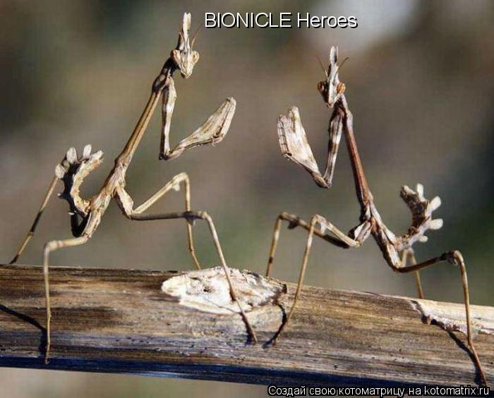 Котоматрица: BIONICLE Heroes