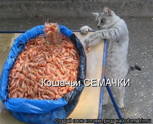 Котоматрица: Кошачьи СЕМАЧКИ