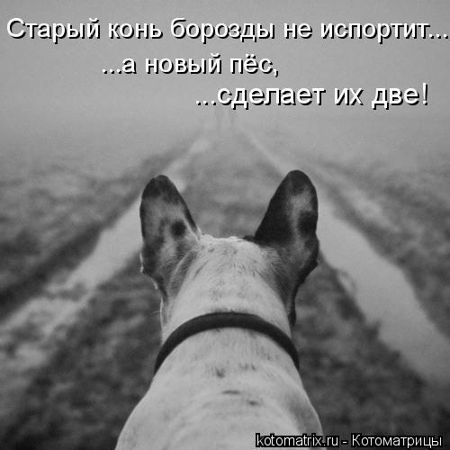 Котоматрица: Старый конь борозды не испортит... ...а новый пёс,  ...сделает их две!
