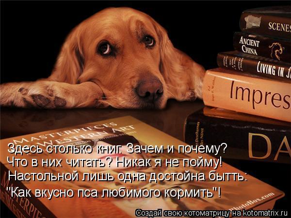 """Котоматрица: Здесь столько книг. Зачем и почему? Что в них читать? Никак я не пойму! Настольной лишь одна достойна бытть: """"Как вкусно пса любимого кормить""""!"""