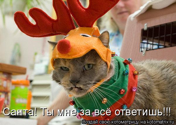 Котоматрица: Санта! Ты мне за всё ответишь!!!