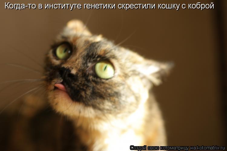 Котоматрица: Когда-то в институте генетики скрестили кошку с коброй