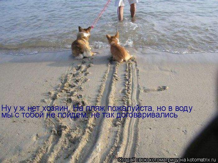 Котоматрица: Ну у ж нет хозяин. На пляж пожалуйста, но в воду мы с тобой не пойдем, не так договаривались