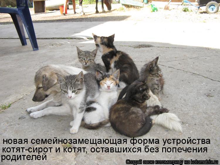 Котоматрица: новая семейнозамещающая форма устройства котят-сирот и котят, оставшихся без попечения родителей