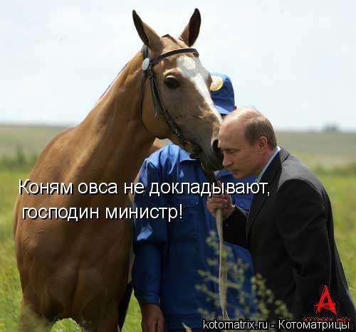 Котоматрица: Коням овса не докладывают, господин министр!