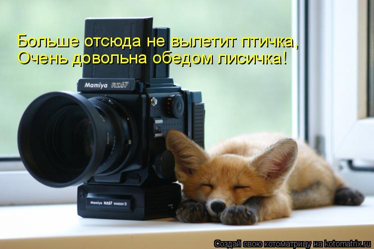 Котоматрица: Больше отсюда не вылетит птичка, Очень довольна обедом лисичка!