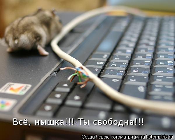 Всё, мышка!!! Ты свободна!!!