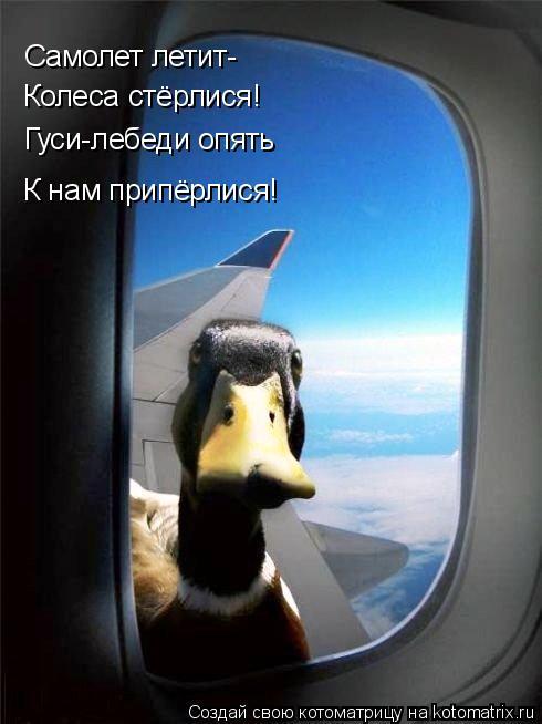 Котоматрица: Самолет летит- Колеса стёрлися! Гуси-лебеди опять К нам припёрлися!