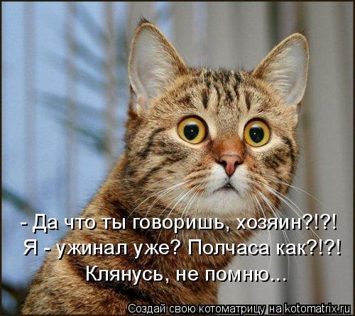 Котоматрица: - Да что ты говоришь, хозяин?!?! Я - ужинал уже? Полчаса как?!?! Клянусь, не помню...