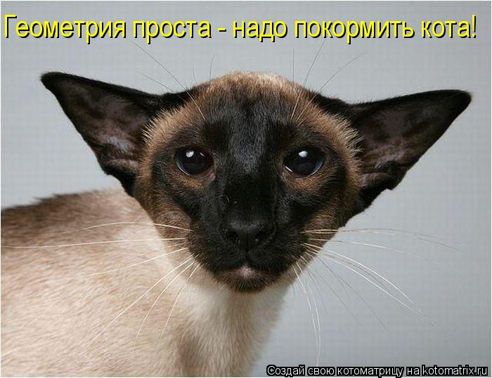 Котоматрица: Геометрия проста - надо покормить кота!