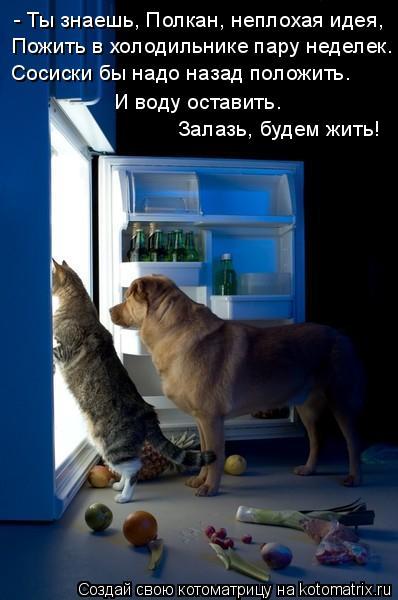 Котоматрица: - Ты знаешь, Полкан, неплохая идея,   Пожить в холодильнике пару неделек.  Сосиски бы надо назад положить.  И воду оставить.   Залазь, будем жить