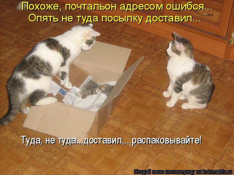Котоматрица: Похоже, почтальон адресом ошибся...  Опять не туда посылку доставил...  Туда, не туда...доставил,...распаковывайте!