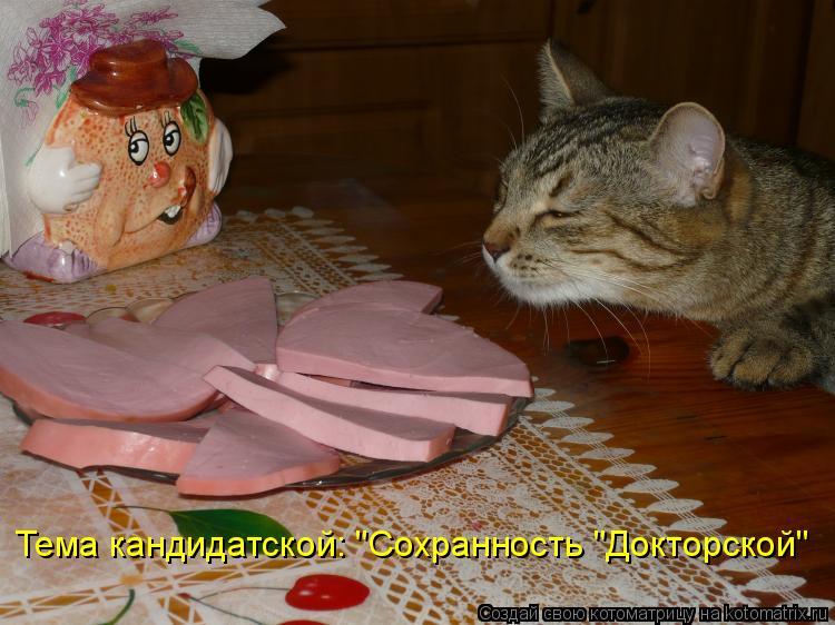 """Тема кандидатской: """"Сохранность """"Докторской"""""""
