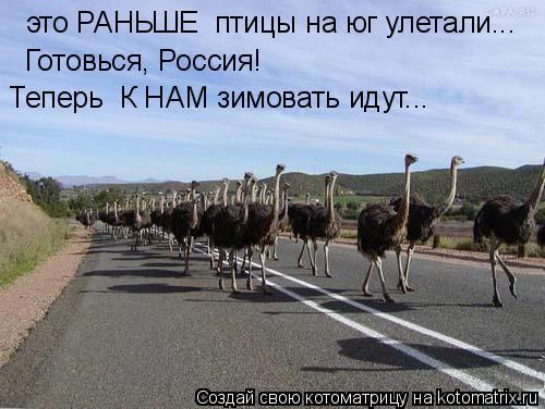Котоматрица: это РАНЬШЕ  птицы на юг улетали... Готовься, Россия! Теперь  К НАМ зимовать идут...